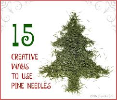 Are Christmas Tree Needles Toxic To Dogs by Pine Needles Are Useful Here Are 15 Ways To Use Them