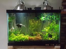 aquarium lighting for live plants 1000 aquarium ideas