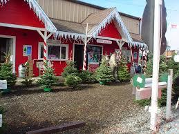 Santa Cruz County Christmas Tree Farms by Santa Clara County California Christmas Tree Farms Choose And