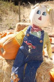 Pumpkin Patch Bellingham Wa by 78 Best Images About From Our Blog On Pinterest