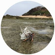 Do Hermit Crabs Shed Their Legs by Do Hermit Crabs The Happy Hermit Crab