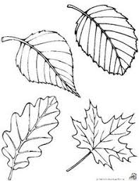 Free Fall Leaf Patterns Print on orange yellow & red paper then have them