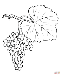 Grapes Coloring Page Pages Free Online
