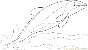 Jumping Hector Dolphin Coloring Page