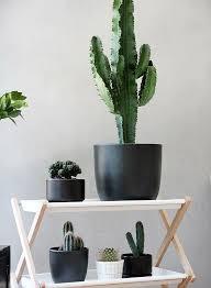 dekostile pflanzen kaktus zimmerpflanzen