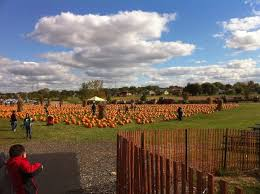 Bengtson Pumpkin Farm Lockport by Bengston U0027s Pumpkin Patch In Homer Glen Il 60491 Citysearch