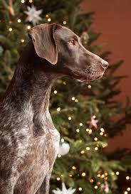 Mr Jingles Christmas Trees San Diego by 115 Christmas Piper U2026 Pinteres U2026