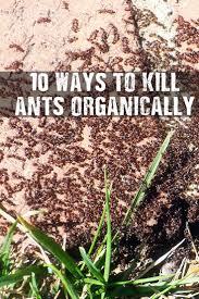 Flying Ants In Bathroom Window by Best 25 Killing Ants Ideas On Pinterest Borax To Kill Ants