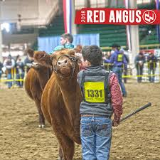 National Western Stock Show | 2018 Red Angus Show Schedule | The Pulse 1021cattle6ajpg Purple Reign Cattle Company Online Sale The Pulse February 2017 Texas Longhorn Trails Magazine By A Good Place To Be Cow At Fort Worth Stock Show Animals Are Commercial And Registered Ozarks Farm Neighbor Newspaper Cattlemen Opmistic About Resumed Beef Exports To China News Blog Lautner Farms Experience The Value Best Of Southwest Shootout Overall Market Burke Hidin In Sand Steer November 2015 Graham Livestock Auction Sanctioned Shows Ijbba Iowa Junior Beef Breeds Association