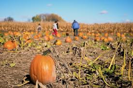 Pumpkin Picking In Ct by When Your Tween Decides The Pumpkin Patch Outing Is Lame Listen