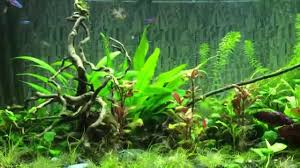 juwel 400 aquarium south american biotope