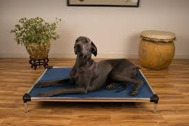 Chew Proof Dog Beds by Help I Need A Chew Proof Dog Bed