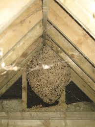 how to get rid of a wasps nest page 6 about britain