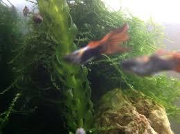 echange aquarium 250l poissons et aquariums 76000 rouen