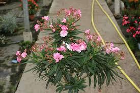 les serres de butry photos des plantes de pépinière proposées à