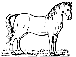 Horse Coloring Book Pages 19 Horses 25733