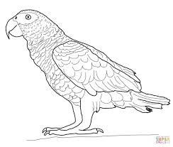 Click The African Gray Parrot Coloring Pages