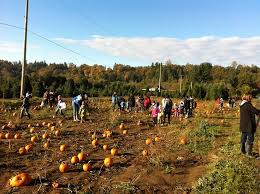 Pumpkin Patch Prince Frederick Md by 63 Best Pumpkin Patches Across Americca Images On Pinterest
