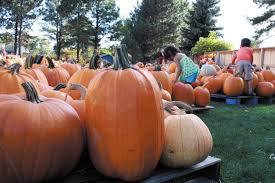 Pumpkin Patch Denver Botanic Gardens by Life Highlands Ranch Colorado Highlandsranchherald Net
