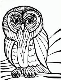 Large Size Of Coloring Pagecoloring Pages Bird Lovely Owl Page