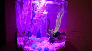 Petco 360 View Aquarium Kit