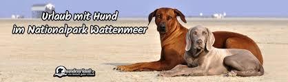 urlaub mit hund im nationalpark wattenmeer nordsee