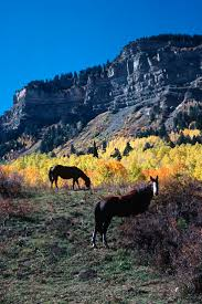 Christmas Tree Permit Colorado Springs 2014 by 41 Best Visit Colorado Images On Pinterest Visit Colorado