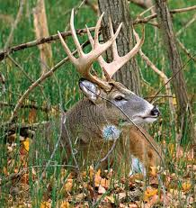 Whitetail Tips How to Map Your Hunting Area