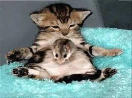 kitty cat cat i m a kitty cat