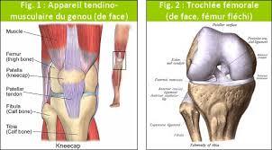 course à pied douleur rotule ou genou plus