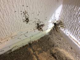 Flying Ants in the Kitchen MERSEYPEST Pest Control Liverpool