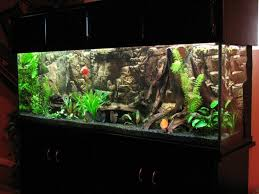 Spongebob Aquarium Decor Amazon by 8 Best Fish Tank Ideas Images On Pinterest Aquarium Ideas Fish