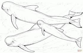 Orca Coloring Page Printable Whale Pages For Killer Pictures Of Whales