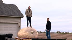 Atlantic Giant Pumpkin Growing Tips by Good Question How Do Pumpkins Grow So Big Wcco Cbs Minnesota