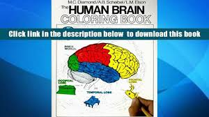 Read Online The Human Brain Coloring Book Concepts