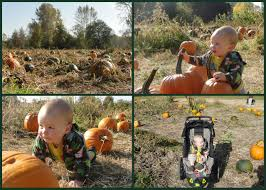 Best Pumpkin Patch Snohomish by Celebrating Fall With Pumpkins At Fall City Farms Wildtalesof Com