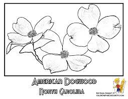North Carolina American Dogwood Flower Printable