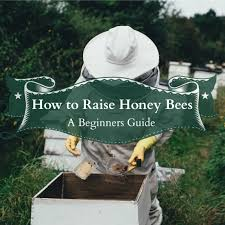 How To Raise Honey Bees: A Beginner's Guide – Homesteading Guide Welcome To The Hive Beverly Bees Beginners Guide Keeping Bee Keeping And Bkeeping Backyard Beehive Image With Capvating How Keep Out Of Like A Girl 10 Mistakes New Bkeepers Make References The Honey Bee Honey Everything You Need To Know About Producing Your Best Images Picture Raise In How Much Room Should I Give My Bees Bees In Backyardbees Huney Back Yard Bulgari 6 Awesome Designs Inhabitat Green Design For Step By