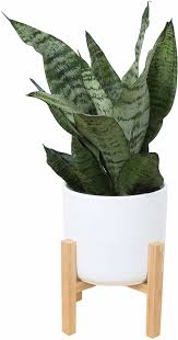 7 Plants You Can Buy On Amazon - Pothos, Fiddle Leaf Fig ... Hollywood Outdoor Adirondack Acacia Rocking Chair By Christopher Knight Home Monster Moooi Shop Designer Fniture Boconcept The Idea Of A Christmas Fireplace Decor Stock Image Rockingchair Pong Brown Knisa Light Beige Vitra Eames Plastic Armchair Rar Vintage155 Tall Wood Spindled Doll Rocking Chair Rocker Stuffed Animal Bear Country Rustic Dark Stain Color Arm With Arms Amazoncom Louise Wood Vintage Miniature Planter Flower Pot Pictures Download Free Images On Unsplash Best Artificial Flowers Silk Paper And Fabric Flora Frankie Dusty Pink