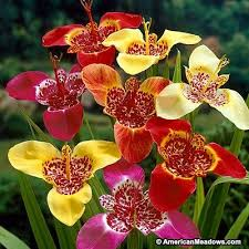 21 best flowers to grow images on flowers garden