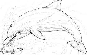 Realistic Dolphin Coloring Pages To Print
