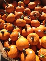 Pumpkin Patches Cincinnati Ohio Area by Seasonal Events