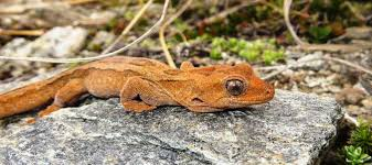 Reports Of Lizards Being Taken Spurs Doc Call | Otago Daily Times ... Lizard Zuk A11b V10 Ls17 Farming Simulator 17 Mod Fs 2017 The Dark Underbelly Of Truck Stops Pacific Standard Pin By Chrimmons On Aesthetics Pinterest Palm Semi Trucks And Rigs I Do Custodial Work At Truck Stops Overnight Ama Iama Lot Lizards Birds Old Loves Allan C Weisbecker Groundbrkingbeatz Thats That 3am Lot Lizard Stop 7 Deadly A Handy Field Guide For Lizardwatchers Beans The Loose Overnight Stop A Reports Lizards Being Taken Spurs Doc Call Otago Daily Times Biologists Remove Invasive Tegu Threatening Floridas Back Off Mustache Coffee With Sapp Brother Truckstop Prostution