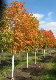 Christmas Tree Farm Lincoln Nebraska by Oak Prairie Nursery U0026 Estates Lincoln Nebraska Home Page