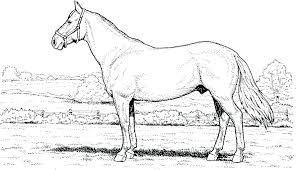 Horse Coloring Page Sheet Head Pages March