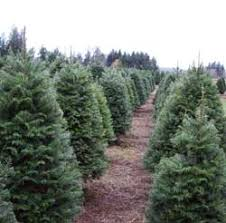 Best Type Of Christmas Tree by Nasa Climate Kids Help Earth Buy A Real Christmas Tree