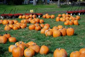 Pumpkin Patch Greenwich Ct by Old Fashioned Fall Family Fun