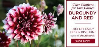 wholesale indoor outdoor flower bulbs direct for sale