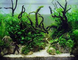 Nature-aquascape | REALISATIONS | Aquascaping | Pinterest | Aquariums Aquascaping Nature Aquariums Of Zoobotanica 2013 Youtube Aquascape The Month November 2009 Riverbank Aquascaping Style Part 5 Roots By Papanikolas Nikos Awards Aquascapes Lab Tutorial River Bottom Natural Aquarium Plants The Planted Tank 40 Gallon Aquarium Everything About Incredible Undwater Art Cube Tanks Aquariums Dutch Vs How To A Low Tech Part 1
