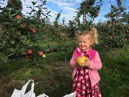 Flower Mound Pumpkin Patch Facebook by Best Apple Picking Orchards In Washington State